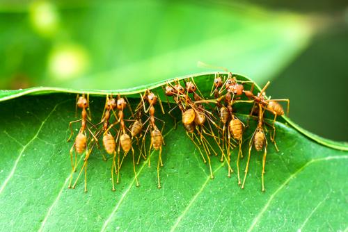 ant coop